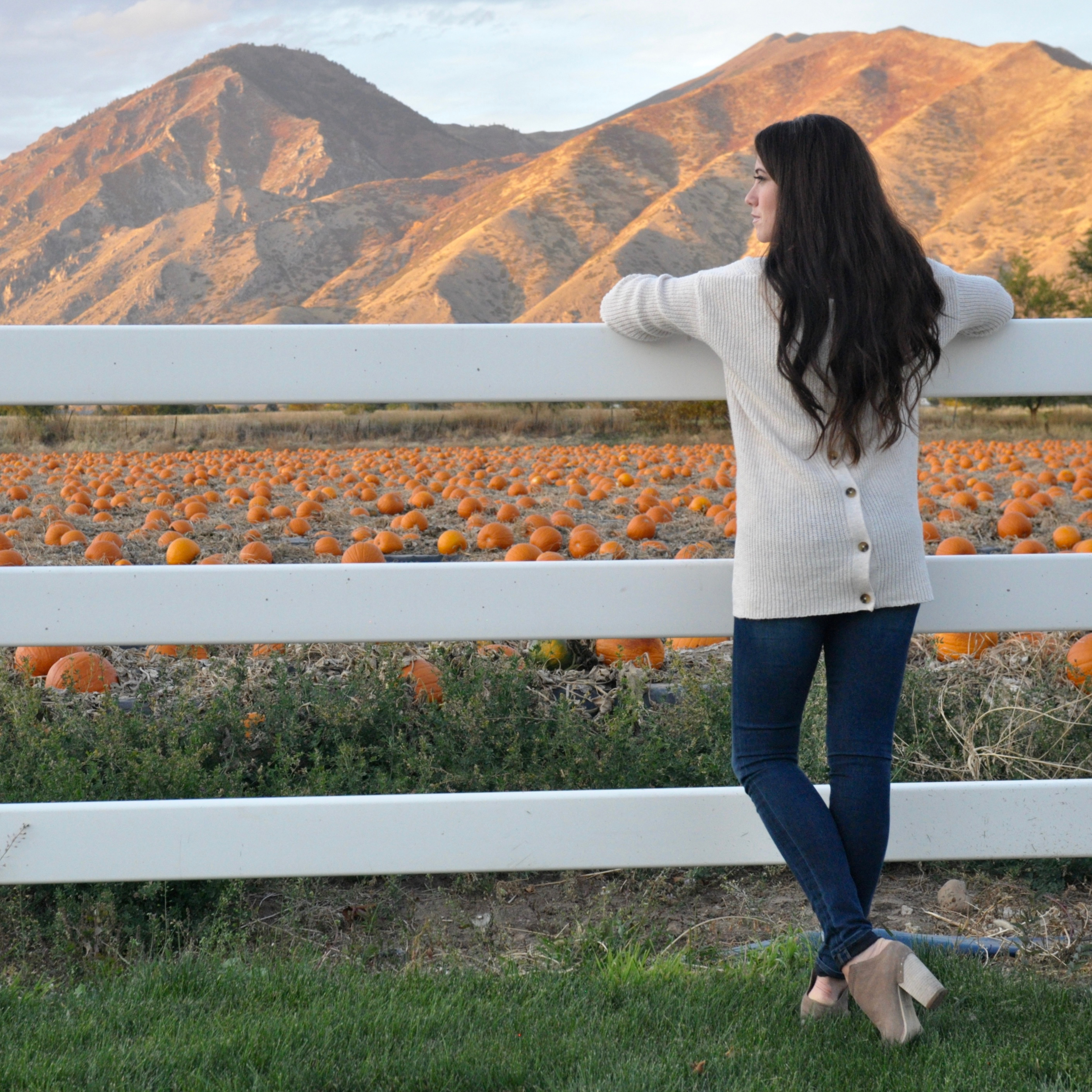 button back fall sweater pumpkin patch sunset